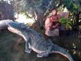 Crocodile de 1,50 m en papier mâché