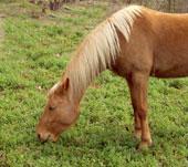 Céline Beauvois équitation et garde de chevaux